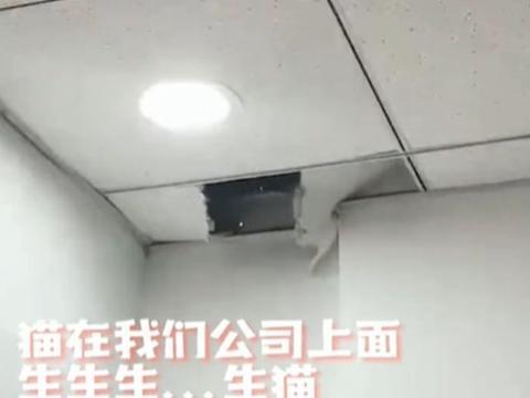安徽:母猫房顶产崽,压迫吊顶从天而降,男子吓得语无伦次