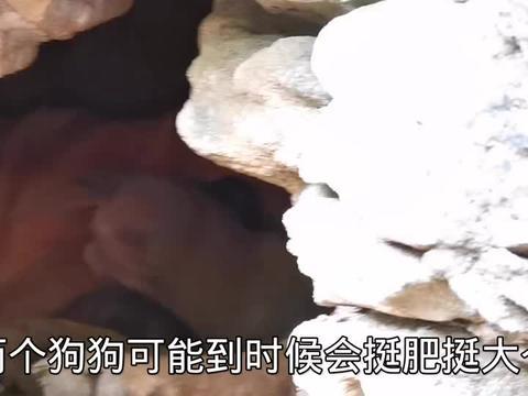 两只小奶狗在山洞出生,躺在地上眼睛都没睁开,四脚朝天想晒太阳
