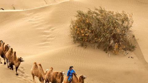 """沙漠中的西瓜可不能摘,它并不是普通的西瓜,有着许多""""毒素""""!"""