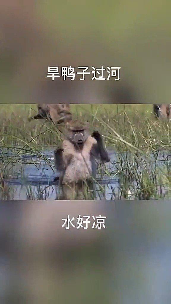 有个猴子竟然还拿了朵花🌸