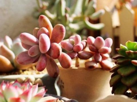 多肉植物做好这几点,长势健壮,安全越冬!