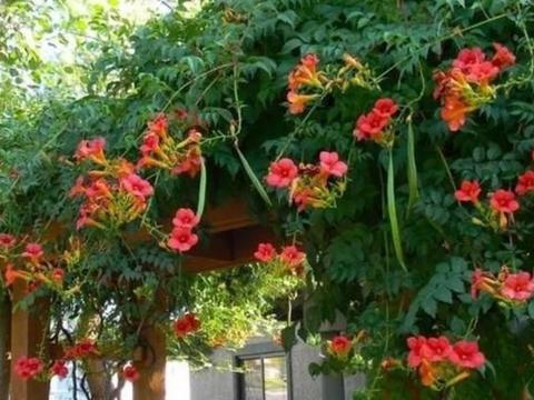 四种花适合初学者养,养护起来超简单,阳台开成小花园