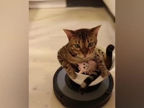 都让开让开,猫皇坐着扫地机器人来巡视江山了