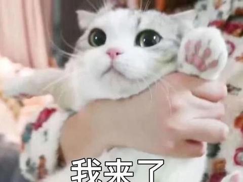 日本一主妇71㎡养12只猫网络走红,把网友都看呆了……