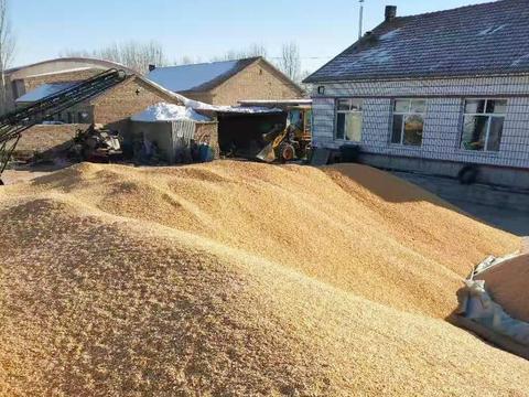 """新小麦刺激,玉米、陈小麦扎堆上涨,粮价新一轮""""涨价潮""""来了?"""