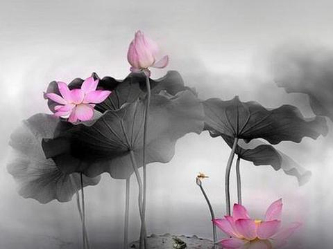 关于心态的人生感悟句子,句句宽心,心烦心累时多看看!
