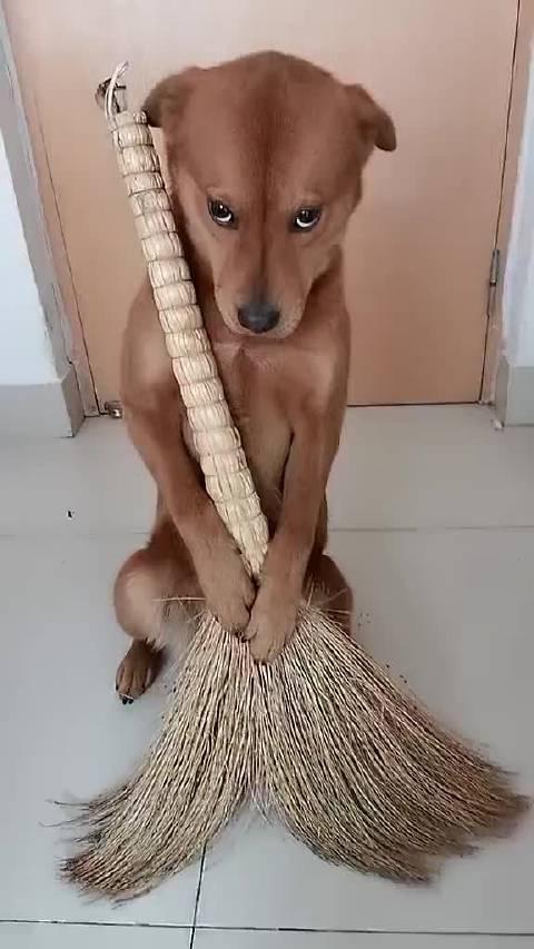 那眼神是多么委屈啊!