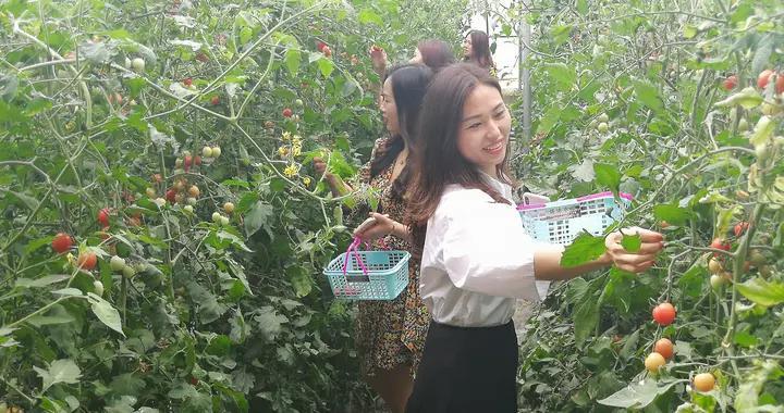 产业化发展气象新——邓州国家农村产业融合发展示范园见闻