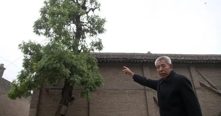 山西农村发现1棵500年生木瓜树,是国宝级古树,看长啥样