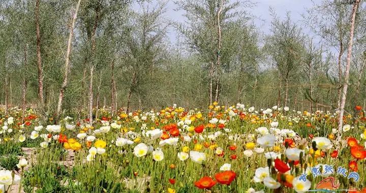 张掖城市森林公园胡杨林长势茂盛