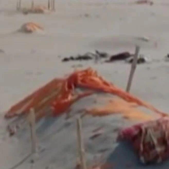 印度多地河流中发现尸体……