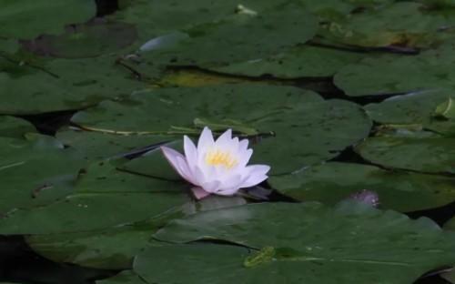 """杭州植物园的""""睡美人""""们盛开了,快来看看吧!"""