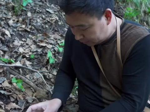 徒步3小时,采集高原野生羊肚菌标本,直呼太漂亮了