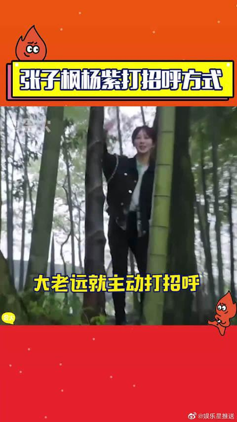 张子枫杨紫打招呼方式太真实,见面第一句先问瘦了吗……