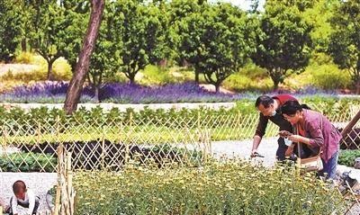 """北京首次尝试""""公园种菜"""",要过三道坎,公园种菜是观念的改变吗"""
