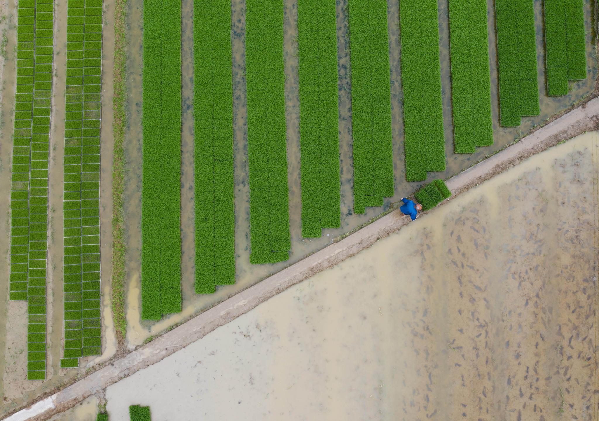杭州临安:农技服务到田间