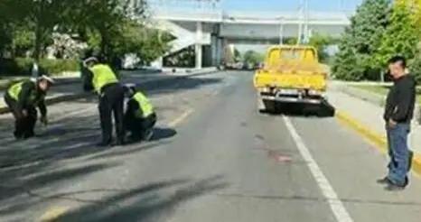 哈尔滨一婆婆牵狗过马路被车撞飞,婆婆受伤狗狗死亡