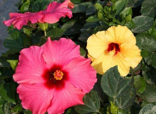 养花养个耐看的,花香清香四溢,花朵一茬接一茬