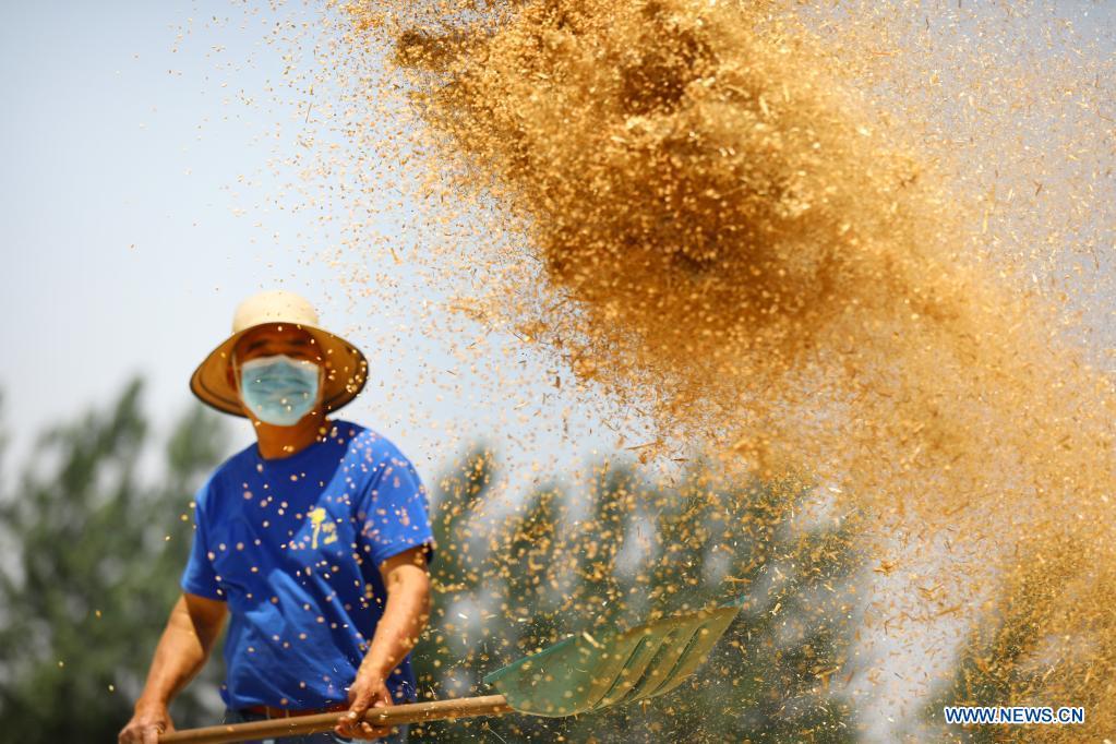 A farmer winnows wheat crops in Xieling Village of Sipu Township, Suixi County, Huaibei, east China's Anhui Province, June 6, 2021. (Photo by Wan Shanchao/Xinhua)