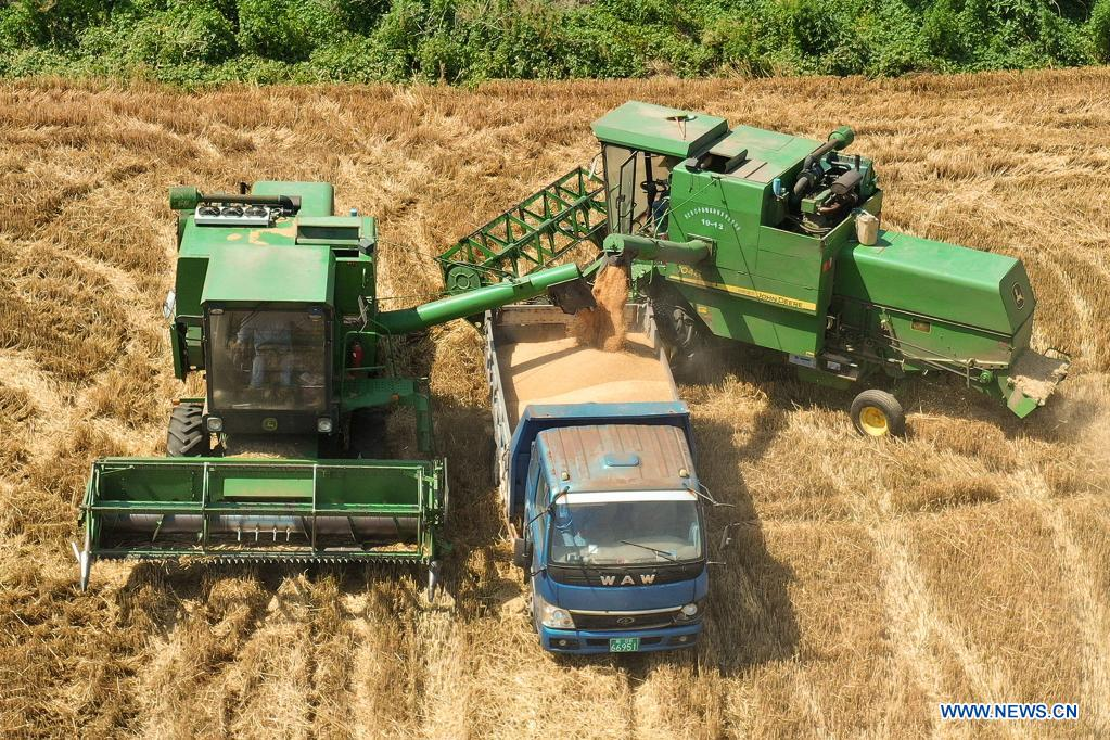 Aerial photo shows farmers loading wheat crops onto a truck on Wupu farm in Suixi County, Huaibei, east China's Anhui Province, June 6, 2021. (Photo by Wan Shanchao/Xinhua)