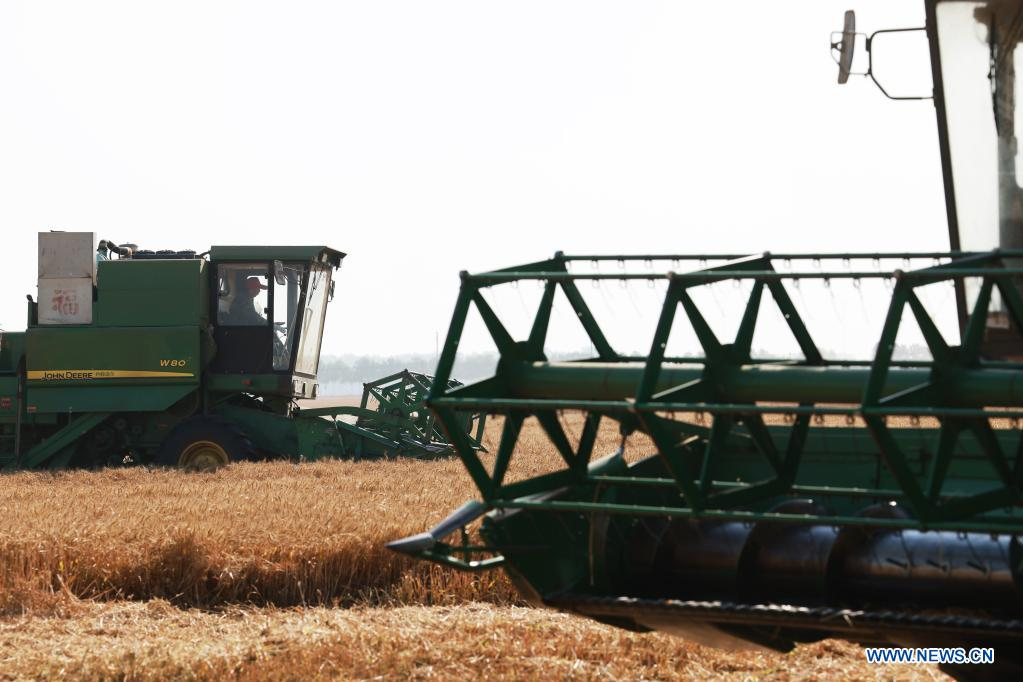 Farmers operate harvesters in a wheat field in Zhoukou, central China's Henan Province, June 6, 2021. Farmers have been busy with summer harvesting activities in Henan Province, a major wheat producing area. (Xinhua/Xu Yanan)