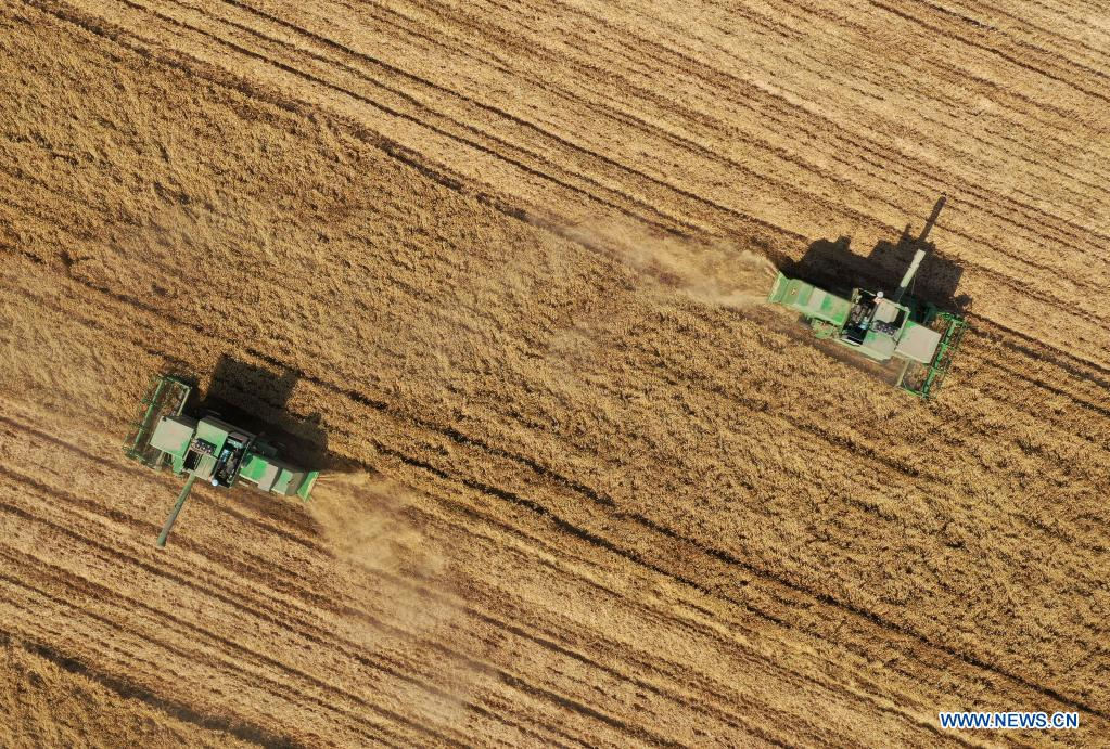 Aerial photo taken on June 6, 2021 shows wheat-reaping harvesters at work in Zhoukou, central China's Henan Province. Farmers have been busy with summer harvesting activities in Henan Province, a major wheat producing area. (Xinhua/Li Jianan)