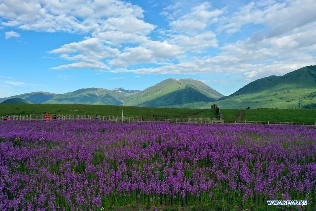 Photo taken on June 9, 2021 shows scenery in Hemu Village of Kanas, northwest China's Xinjiang Uygur Autonomous Region. (Xinhua/Sadat)