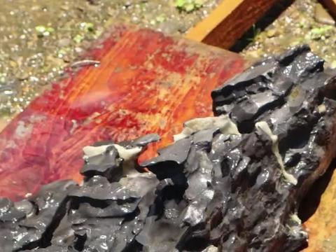 景观石上覆盖了厚厚的青苔鱼粪太脏了,用高压水枪清洗瞬间解脱了