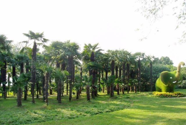 城市园林绿化需要注意的问题