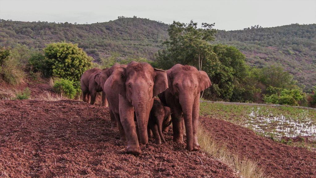 """【跟着大象逛云南·""""象""""滇记】⑤昆明:""""象""""伴而生的地方"""