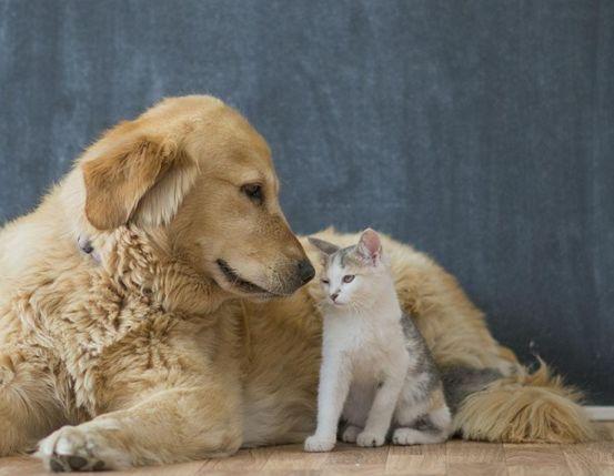 狗粮的存在,一是方便,二是健康省事