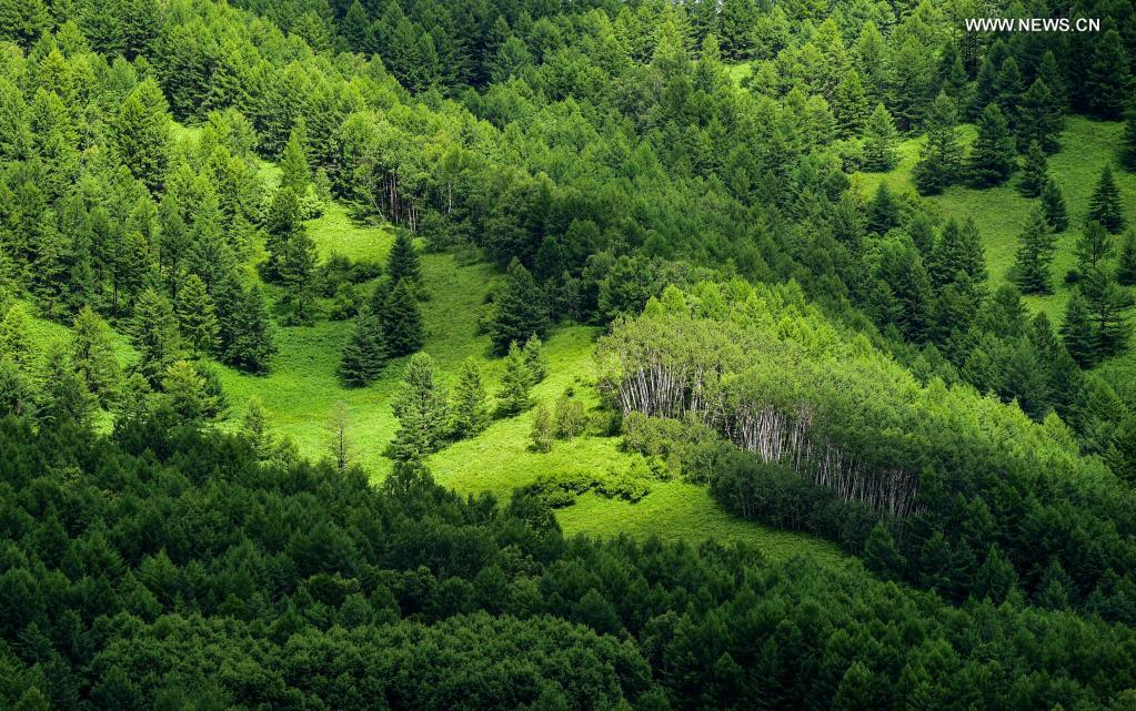 Photo taken on July 14, 2021 shows a view of the Arxan National Forest Park, north China's Inner Mongolia Autonomous Region. (Xinhua/Lian Zhen)
