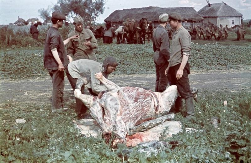 老照片 苏联战场上的<a href=