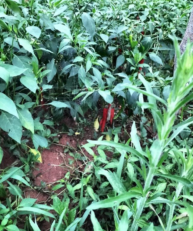 在市场上,能不能买到不打农药、不施化肥的绿色