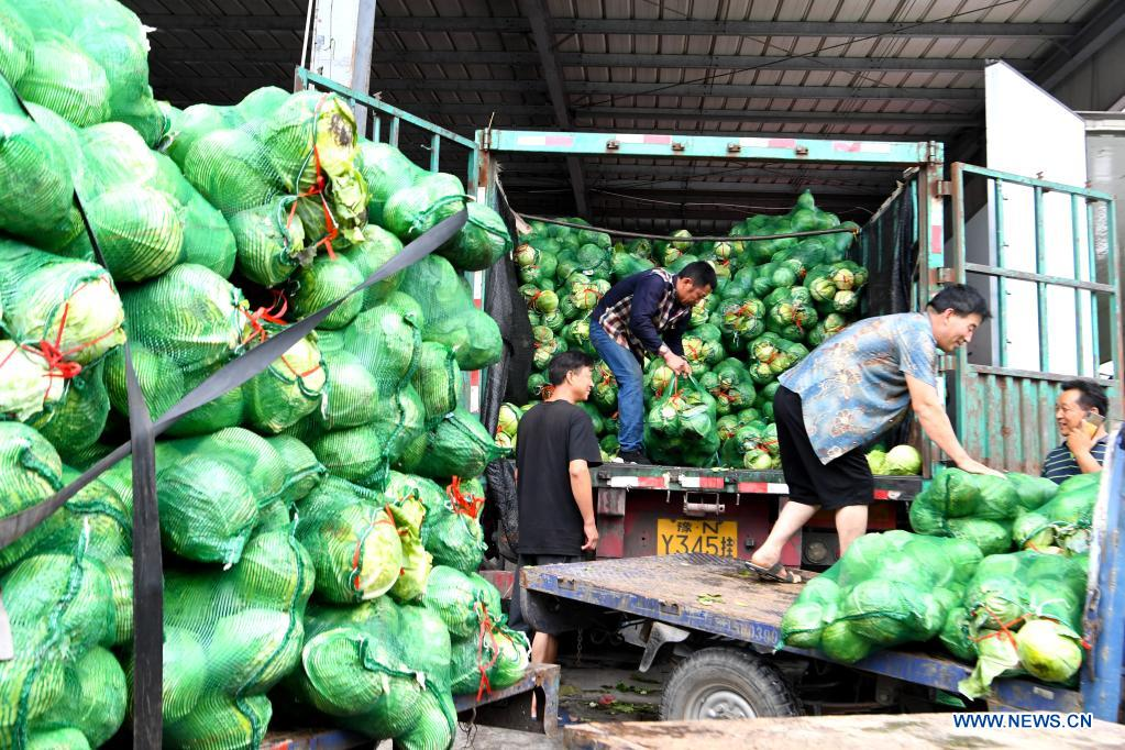 Staff members transfer vegetables at a logistic center in Zhongmu County of Zhengzhou, central China's Henan Province, July 22, 2021. Various measures have been taken to ensure supply of agricultural products in Zhengzhou, which was swamped by flood recently caused by heavy rainfall. At present, the supply of vegetables has been adequate with stable price. (Xinhua/Hao Yuan)