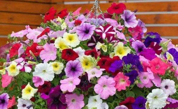 4种花是花中劳模,家里充满色彩感,阳台变成小