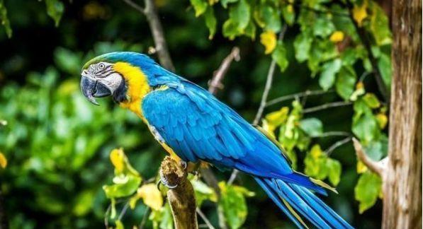 心理学:第一眼认为哪只鹦鹉最聪明?测你最近会出现什么意外惊喜
