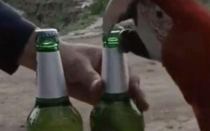 男子养了三年的鹦鹉,喝酒时排上大用场,朋友拍手称赞