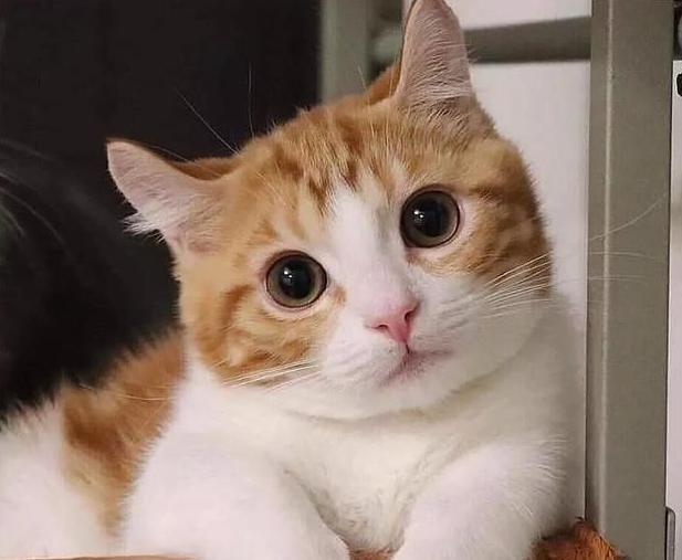"""养""""猫咪""""的苦,只有养过的宠主才懂!"""