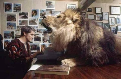 女子把狮子当宠物养,随后发生的一切让她懊悔不已