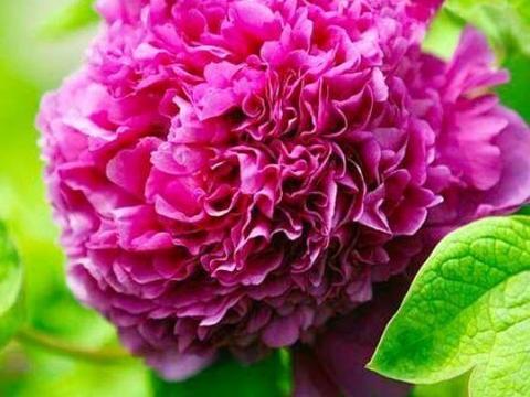 种花好养又漂亮,花朵大花期长,个个颜值高,叶子漂亮