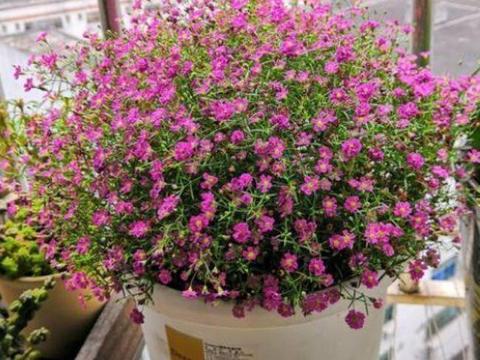 种花好养又漂亮,家里养一盆,满屋飘香,养庭院,十里飘香