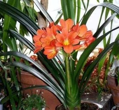 4种花养了就爆盆,夏天开花很漂亮,花量大不操心
