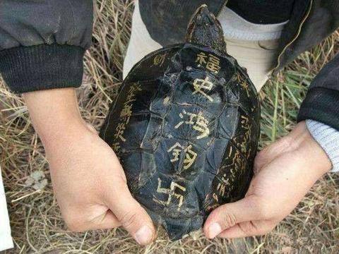 男子河里钓起乌龟,准备将其放生,旁边大叔说吃了也不要放生