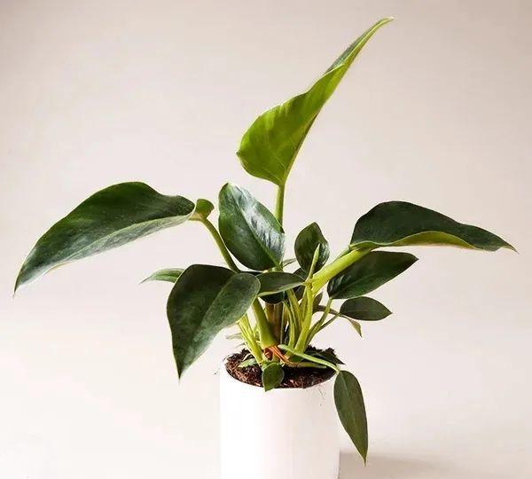 适合在半阴处栽种的6种观赏植物,给一点柔和光照