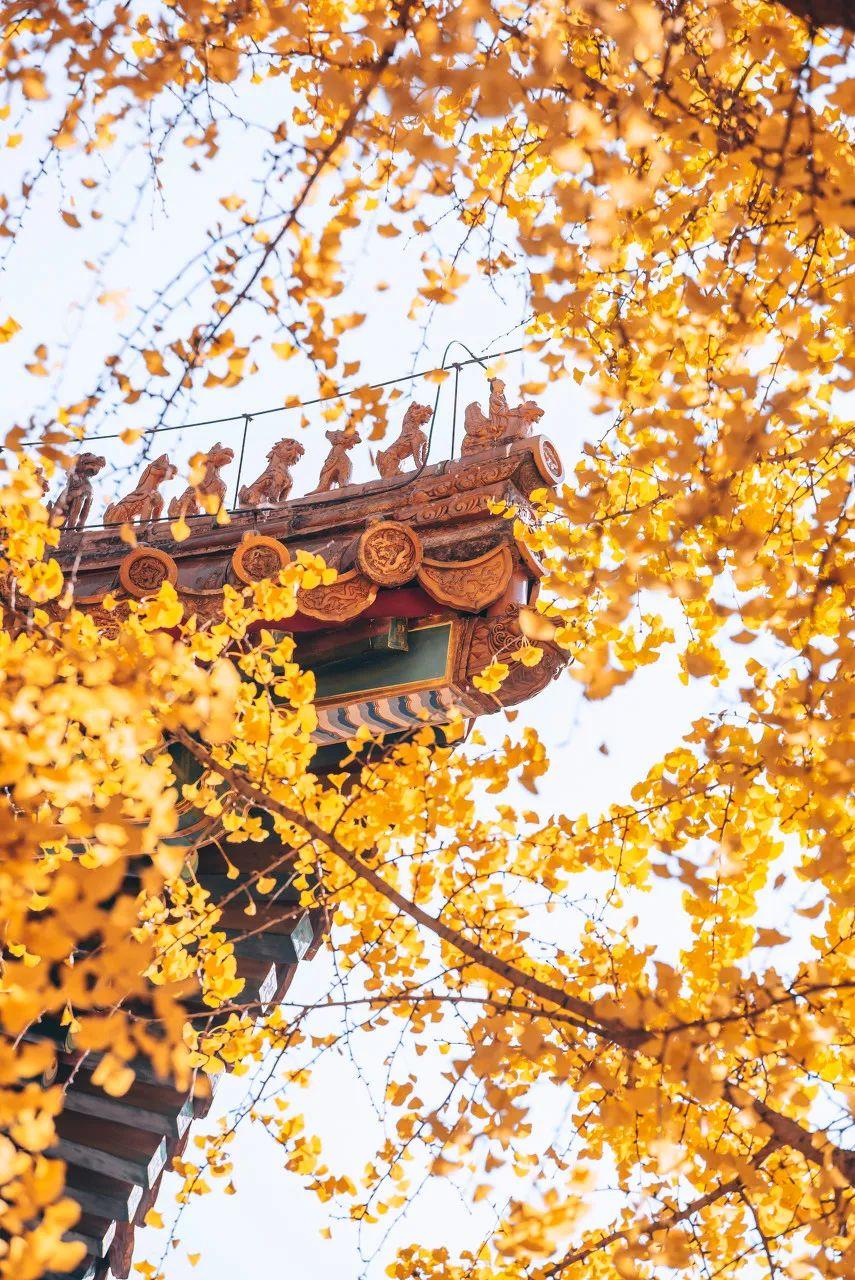 一到秋天 北京就美成了北平