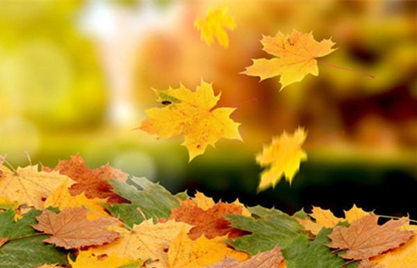 秋行随想,让秋阳与秋风一起走秀