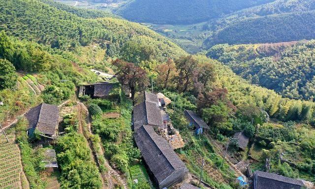 宁波古树群,人文与风景荟萃,乡村旅游目的地