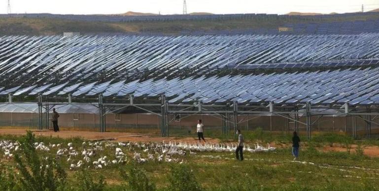 发电站放养3000只羊,解决世界性难题?连<a href=