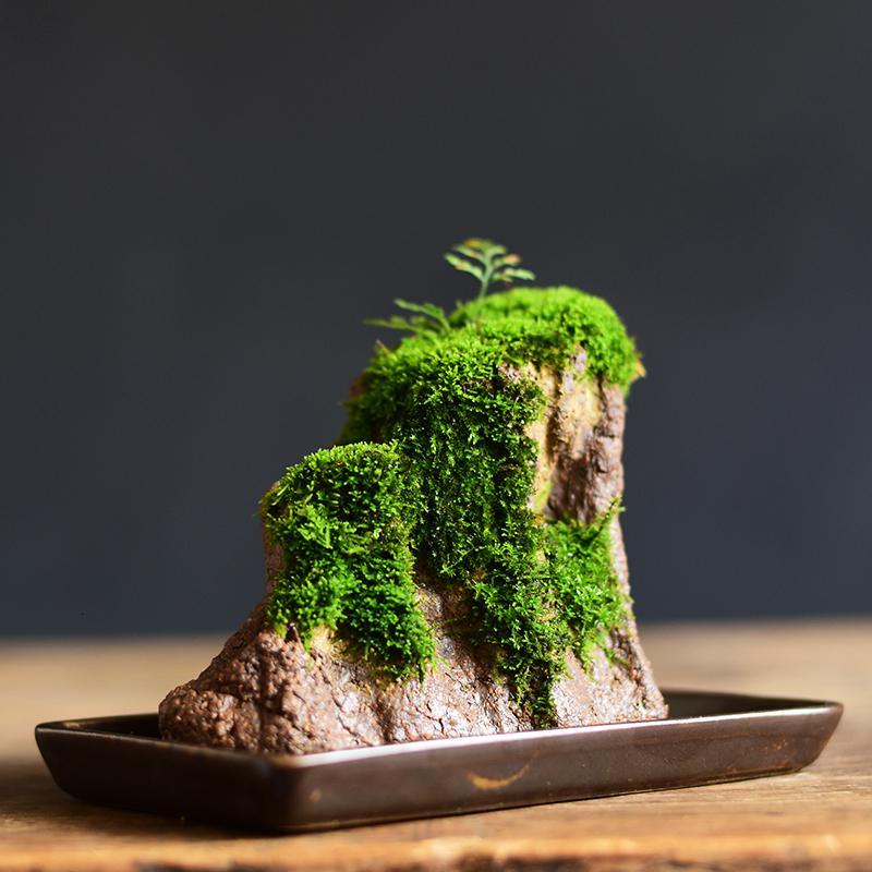 藏在阴暗角落的苔藓,制作盆景时不可缺,堪称